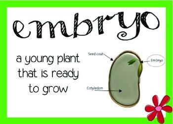 Plants Vocabulary Word Wall Cards (Vocab)