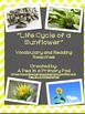 """Plants and Life Cycle of a Sunflower"" Nonfiction Guided R"