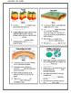 Plate Tectonics: Accordion Foldable