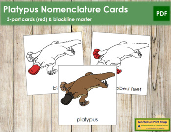 Platypus Nomenclature Cards - Red