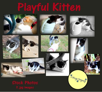 Playful Kitten - Stock Photos - Photo Pack Bundle - Zoo Animals