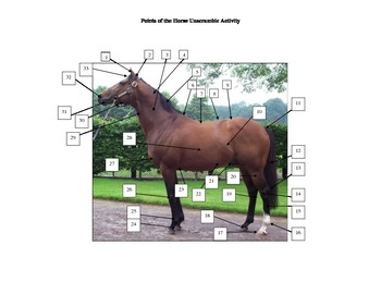 Points of the Horse Activity
