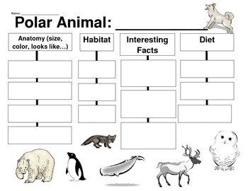 Polar Animal Graphic Organizer