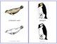 Polar Animals: Tracing Cards