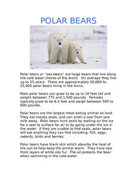 Polar Bear Informational Comprehension Pack