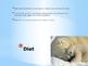 Mammals- Polar Bears