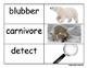 Polar Bears Nonfiction Close Read Comprehension