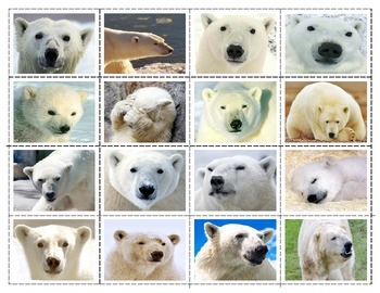 Polar Bears: Expressions Match-up Cards