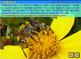 Pollination, Fertilization & Seed Dispersal - an Interacti