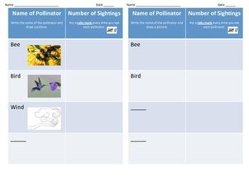 Pollinators Graphic Organizer