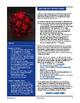 STEAM - Polyhedra Nightlights Art Instructable