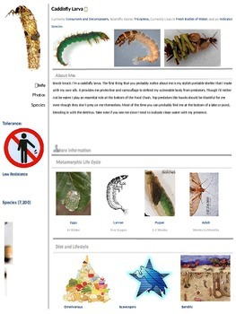 Pond Creature Profiles