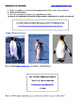 Pop Up Penguins