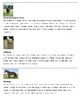 Popular Horse Breeds: Three Part Cards and Information Cards