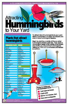 Poster - Attracting Hummingbirds