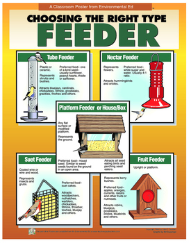 POSTER  Choosing the right Bird Feeder