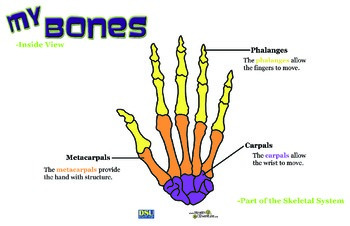 Poster: My Bones - Inside View