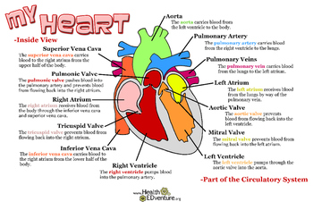 Poster: How the Heart Works