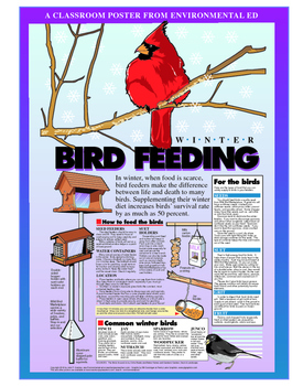 Poster - Winter Bird Feeding