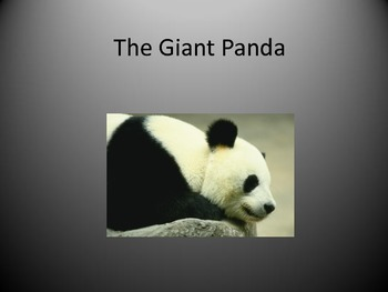 Power Point Lesson With Questions-The Giant Panda