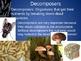 Powerpoint Lesson - Heterotrophs (carnivores, omnivores, etc.)