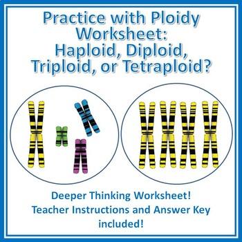 Practice with Ploidy Worksheet: Haploid, Diploid, Triploid