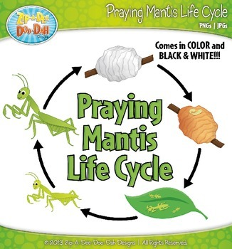 Praying Mantis Life Cycle Clip Art Set — Comes In Color an