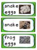 Preschool Reptile and Amphibian Unit