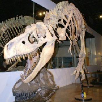 Preschool/Kinder Moves! Dinosaurs Unit