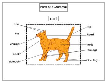 Printables: Parts of a Mammal (cat)