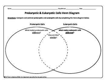 Prokaryotic Cell versus Eukaryotic Cell Venn Diagram
