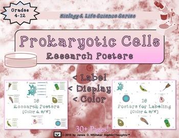 Prokaryotic Unicellular Organisms Researh & Labeling Posters