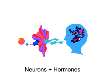 Psychology: Neurons + Hormones (Presentation)