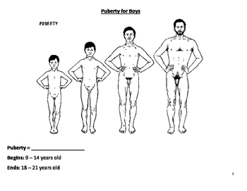Puberty for Boys Diagrams