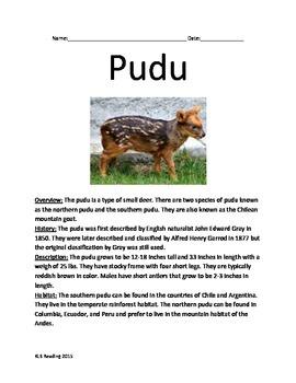 Pudu - Endangered Deer species - Informational Article Fac