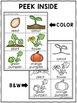 Pumpkin Life Cycle Craft Actvities