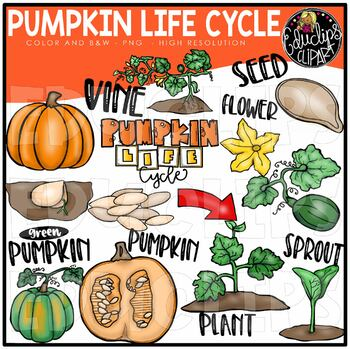 Pumpkin Life Cycle Clip Art Bundle {Educlips Clipart}