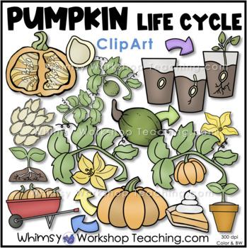 Pumpkin Life Cycle Clip Art - Whimsy Workshop Teaching