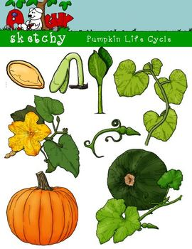Pumpkin Life Cycle Clipart, Graphic - 300dpi Color Graysca