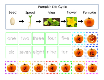 Pumpkin Life Cycle Cut and Paste Matching Numbers 1 to 10