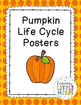 Pumpkin Life Cycle Poster