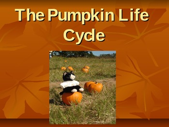 Pumpkin Life Cycle Powerpoint