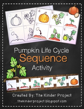 Pumpkin Life Cycle Sequence Activity