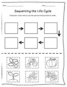 Pumpkin Life Cycle Sequencing