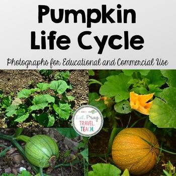 Pumpkin Life Cycle Stock Photos