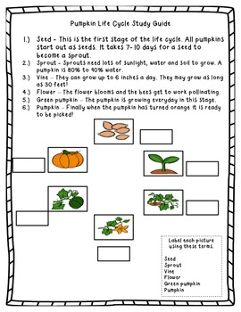 Pumpkin Life Cycle Study Guide