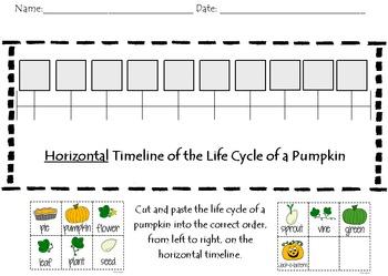 Pumpkin Life Cycle Timeline