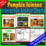 Pumpkin Science Unit
