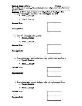 Punnett Square Practice Worksheets