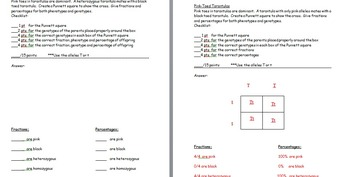 punnett square practice worksheets with answer by the science lady teachers pay teachers. Black Bedroom Furniture Sets. Home Design Ideas